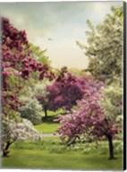 Cherry Tree Grove Fine-Art Print