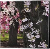 Japanese Cherry Fine-Art Print