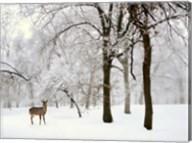 Winter's Breath Fine-Art Print
