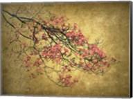 Asian Dogwood Fine-Art Print