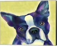 Boston Terrier 1 Fine-Art Print