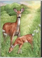New Mother and Fawn Fine-Art Print