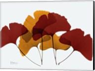 Gingko Fall Fine-Art Print