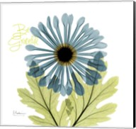 Greatful Chrysanthemum H68 Fine-Art Print