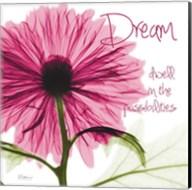 Pink Chrysanthemum Dream Fine-Art Print