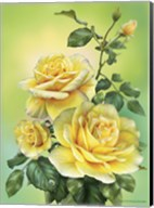Roses Yellow Fine-Art Print