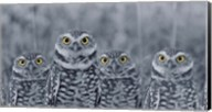 Pop of Color Burrowing Owl Family Fine-Art Print