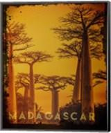Vintage Baobab Trees in Madagascar, Africa Fine-Art Print