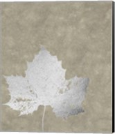 Silver Foil Leaf II on Lichen Wash Fine-Art Print