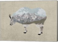 Rocky Mountain Goat Fine-Art Print