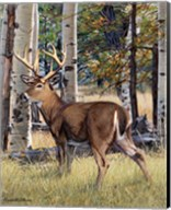 Fall Whitetail Fine-Art Print