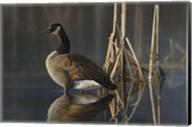 Greet the Sun - Canada Goose Fine-Art Print