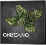 Oregano on Chalkboard Fine-Art Print
