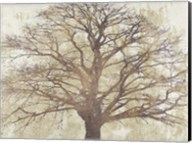 Sacred Oak Fine-Art Print