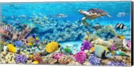 Sea Turtle and fish, Maldivian Coral Reef Fine-Art Print