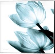 Translucent Tulips II Sq Aqua Fine-Art Print
