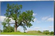 Mississippi, Greenville Winterville Mounds Fine-Art Print