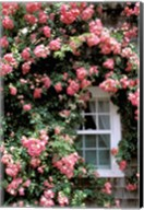 Massachusetts, Nantucket Island, Roses and home Fine-Art Print