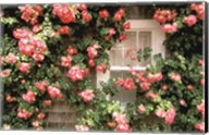 Roses and home, Nantucket Island Fine-Art Print