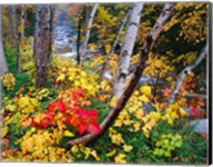 New Hampshire, White Mountains National Forest Fine-Art Print
