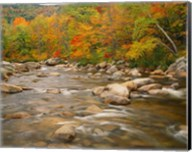 River flowing trough Forest in Autumn, White Mountains National Forest, New Hampshire Fine-Art Print