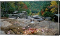 Fall Foliage, Appalachian Trail, White Mountains, New Hampshire Fine-Art Print