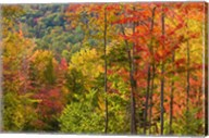 Forest in Grafton, New Hampshire Fine-Art Print