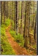 A trail around Ammonoosuc Lake, White Mountain National Forest, New Hampshire Fine-Art Print