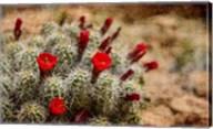 Desert Flower 3 Fine-Art Print