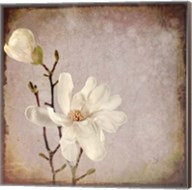 Paper Magnolia Duo Fine-Art Print