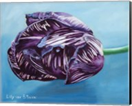 English Society Tulip Fine-Art Print