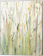 Spring Grasses I Crop Fine-Art Print