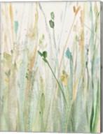 Spring Grasses II Crop Fine-Art Print