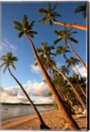 Coral Coast, Viti Levu, Fiji Fine-Art Print