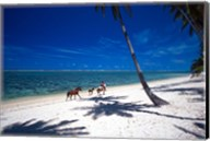 Horses on Beach, Tambua Sands Resort, Coral Coast, Fiji Fine-Art Print