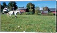 Woman Riding Horseback on Skiff Mountain, Litchfield Hills, Connecticut Fine-Art Print