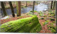 Forest of Eastern Hemlock Trees, Connecticut Fine-Art Print