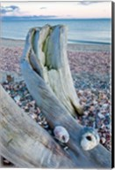 Driftwood on the shell-covered Long Beach in Stratford, Connecticut Fine-Art Print