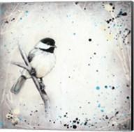 Chickadee Fine-Art Print