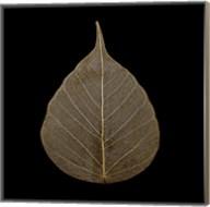 Brown Leaf Fine-Art Print