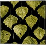 Green Leafs Fine-Art Print