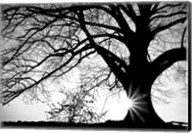 Old Tree Fine-Art Print