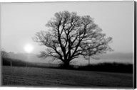 Tree On Fields Fine-Art Print