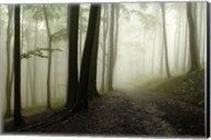 Road Through The Woods Fine-Art Print
