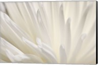 White Flower Fine-Art Print
