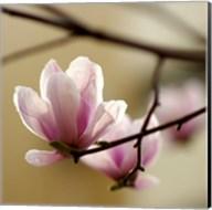 Tulip Tree Fine-Art Print