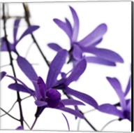 Purple Blossom 1 Fine-Art Print
