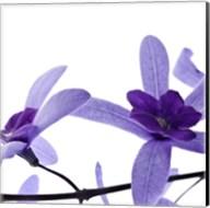 Purple Blossom 2 Fine-Art Print