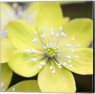 Yellow Blossom Fine-Art Print