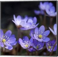 Purple Flowers 1 Fine-Art Print